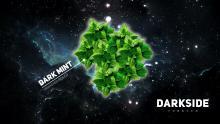 Dark Side Soft 100г - Dark Mint